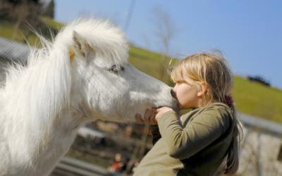 """""""Mit allen Sinnen unsere Pferde und Ponys erleben"""""""